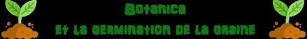 Botanica et la germination de la graine 2
